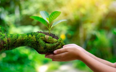 What is the importance of Nature in Child Development?